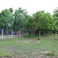 Miếng đất vườn cần bán gấp 300tr LH: 0349422020