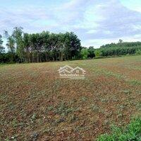 1030m2 đất vườn thôn Diêu Phong, có thể chia nửa LH: 0905785198