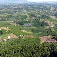 Đất nghỉ dưỡng view đồi thông giá rẻ tại Đambri LH: 0349238918