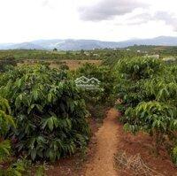 chi tiết Bán đất sào giá rẻ tại Nam Hà - Lâm Hà - Lâm đồng LH: 0943572018