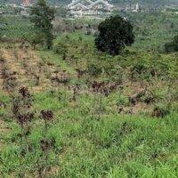 Cần bán 15 mẫu đất nông nghiệp còn thương lượng LH: 0815650997