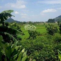Bán đất xã Yên bình Thạch thất Hà nội diện tích rộng m2 có 400m2 đất thổ cư LH: 0986667861