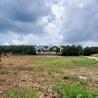 Bán đất mặt tiền xã Bàu Cạn gần sân bay Long Thành LH: 0818688868