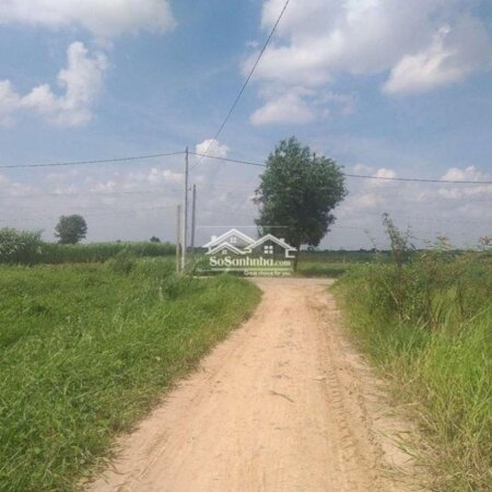 Đất Vườn Quy Hoạch Khu Dân Cư 605M, Tân Thạnh Đông- Ảnh 3
