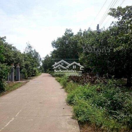 Đất Huyện Đức Linh 12540M²- Ảnh 4