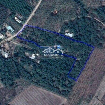 Đất Huyện Đức Linh 12540M²- Ảnh 8