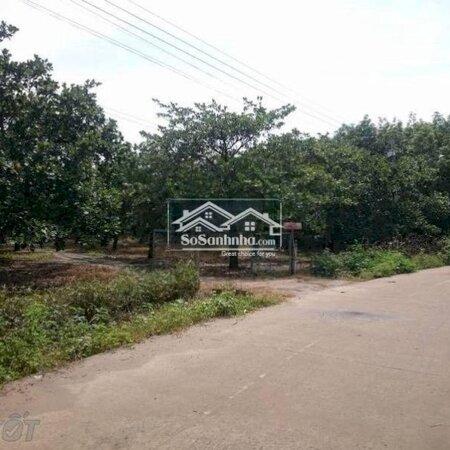 Đất Huyện Đức Linh 12540M²- Ảnh 2