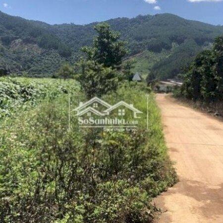 Đất Chính Chủ Cần Bán 7986M2 Đông Thanh, Lâm Hà- Ảnh 4