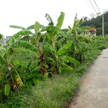 Bán đất đấu giá tại xã Đọi Sơn, Duy Tiên, Hà Nam; DT: 114m2; MT: 5,7m; đường 5,5m;- Ảnh 2