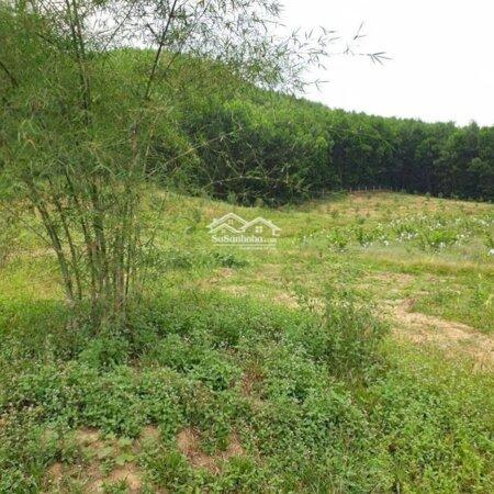 Cần Bán Lại Trang Trại Nghỉ Dưỡng Tại Xã Hòa Ninh Dưới Chân Núi Bà Nà Có Gần 1000M2 Đất Ở Giá Tốt- Ảnh 6