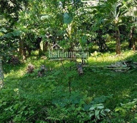 Cần Bán Tuyệt Phẩm 3600M2 Đất Cư Yên, Giá Cực Rẻ, Thích Hợp Làm Nhà Vườn Nghỉ Dưỡng- Ảnh 4