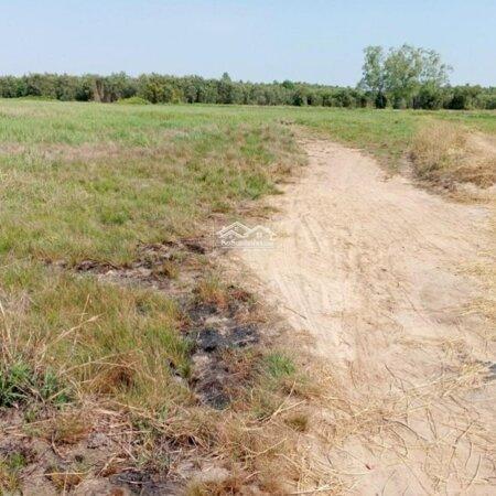Đất Làm Vườn Giá Rẽ Chỉ Bán Nhanh Cho Khách Thiện Chí Ngay Xã Tân An Hội- Ảnh 4