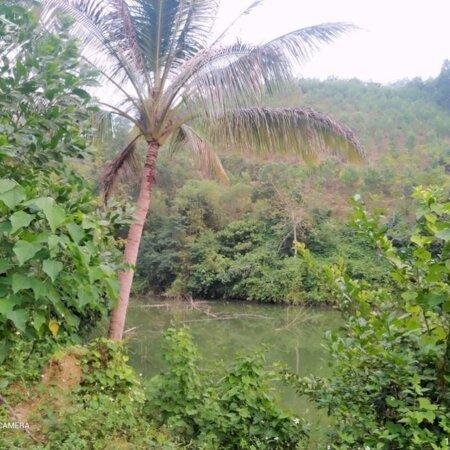 Bán đất Kim Bôi Hòa Bình DT 1,2ha có 400m ont còn lại là đất vườn view đẹp giá 1,6 tỷ- Ảnh 1