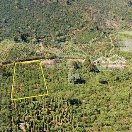 Đất Huyện Di Linh 2.200M²- Ảnh 3