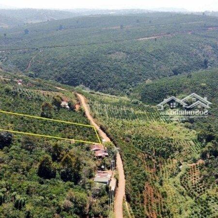 Đất Huyện Di Linh 2.200M²- Ảnh 2