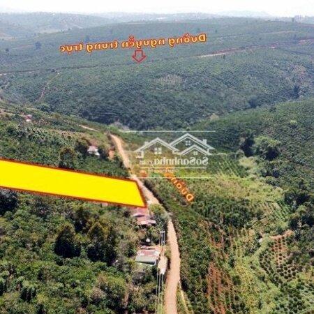 Đất Huyện Di Linh 2.200M²- Ảnh 1