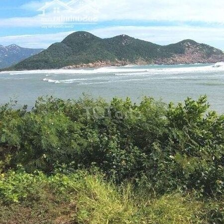 6000M View Biển Ninh Vân Bay Quy Hoạch Dịch Vụ- Ảnh 2