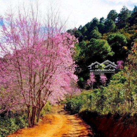 Đất Nền Nghĩ Dưỡng Bảo Lộc Xây Homesaty, Bungalow- Ảnh 3