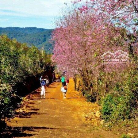 Đất Nền Nghĩ Dưỡng Bảo Lộc Xây Homesaty, Bungalow- Ảnh 8