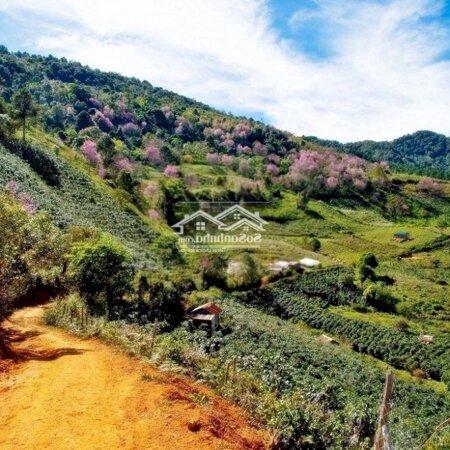 Đất Nền Nghĩ Dưỡng Bảo Lộc Xây Homesaty, Bungalow- Ảnh 2