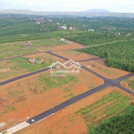 Đất Bảo Lộc Sổ Sẵn Chỉ 239 Triệu Sở Hữu Ngay 125M2- Ảnh 3