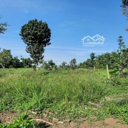 Bán Vườn Thôn 6, Lộc Nam, Bảo Lâm, Lâm Đồng- Ảnh 2