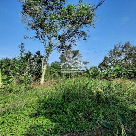 Bán Vườn Thôn 6, Lộc Nam, Bảo Lâm, Lâm Đồng- Ảnh 3
