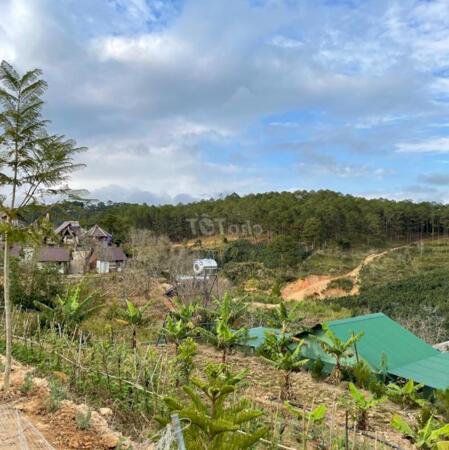 Bán đất tặng nhà gỗ đang kinh doanh homestay diện tích 1000m2 giá 4,5 tỷ- Ảnh 2