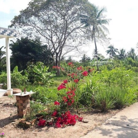 Đất Nghĩ Dưỡng Hơn Nữa Công Vườn Gần Cầu Cần Thơ- Ảnh 4