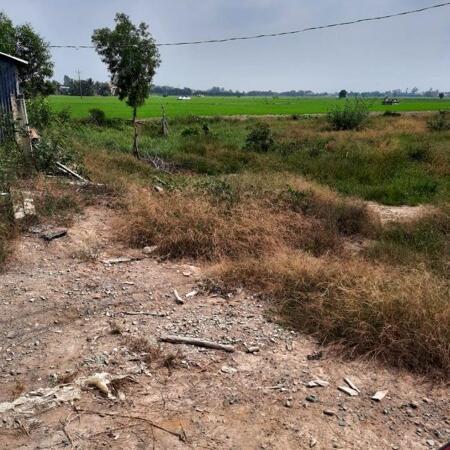 Cần bán 6.000m2 đất lúa (có thổ 600m2+nhà cấp 4) giá rẻ Thủ Thừa, tỉnh Long An.- Ảnh 3