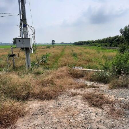 Cần bán 6.000m2 đất lúa (có thổ 600m2+nhà cấp 4) giá rẻ Thủ Thừa, tỉnh Long An.- Ảnh 1
