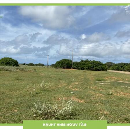 Cần tiền xài sau tết bán đất nông nghiệp 90,000/m2 tại huyện Bắc Bình, Bình Thuận- Ảnh 2