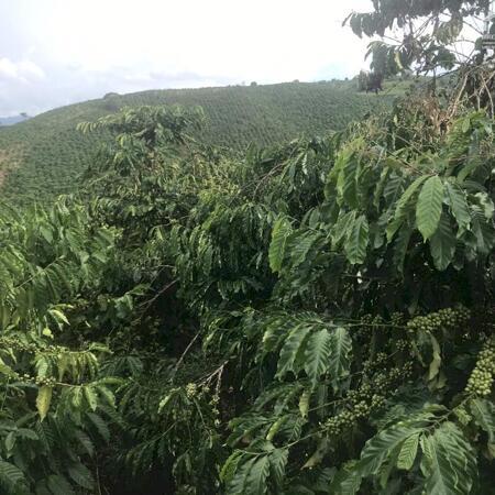 Bán 40.000m2 đất vườn Xã Đạ Đờn - Lâm Hà, view cao-đẹp, đường oto, đường nhựa, cách trường cấp3 3km- Ảnh 9