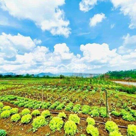 Đất Huyện Bảo Lâm 125M²- Ảnh 3