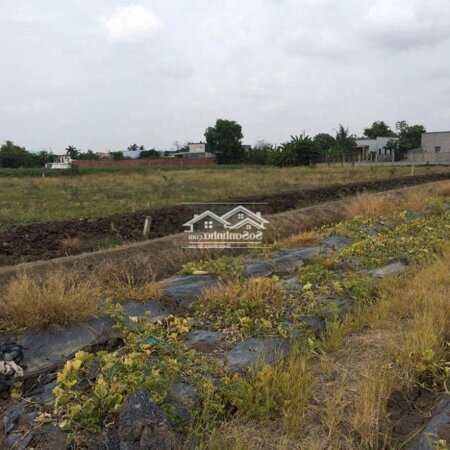 Cần Bán 3290M2 Đất Xã Mỷ Lộc Huyện Cần Giuộc- Ảnh 3