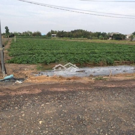 Cần Bán 3930M2 Đất Xã Mỷ Lộc Huyện Cần Giuộc- Ảnh 3