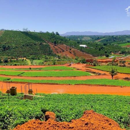Bán đất thổ cư sổ riêng đồi chè Tâm Châu 669 Triệu, hạ tầng mới 100%- Ảnh 5