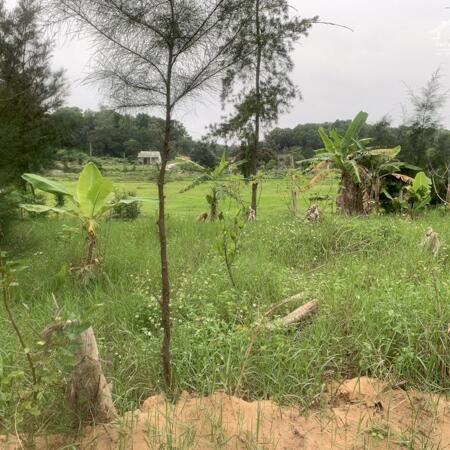 Đất trung tâm khu du lịch nghỉ dưỡng Cô Tô Quảng Ninh cần bán gấp giá tốt vị trí đẹp- Ảnh 2