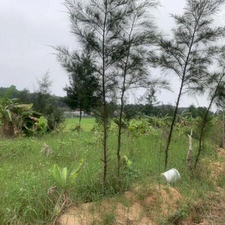 Đất trung tâm khu du lịch nghỉ dưỡng Cô Tô Quảng Ninh cần bán gấp giá tốt vị trí đẹp- Ảnh 3