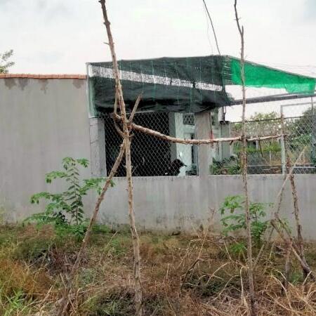 Nhà cấp 4, sổ hồng riêng, 80 m2 (5 x 16m) mỹ lộc, cần giuộc, 800 tr- Ảnh 2