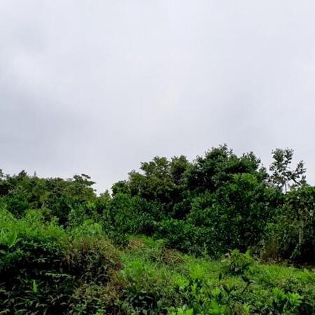 Bán đất Cao Phong 3,6ha view cao thoáng siêu đẹp- Ảnh 1