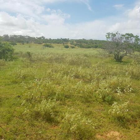Mua bán đất Thị Trấn Lương Sơn 8725m2 vuông đẹp giá 828 triệu.sổ hồng riêng- Ảnh 1