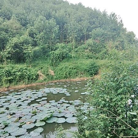 Bán đất Kim Bôi dt 4,5ha có 400m2 thổ cư,gần 1ha đất vườn còn lại là đất rsx- Ảnh 1