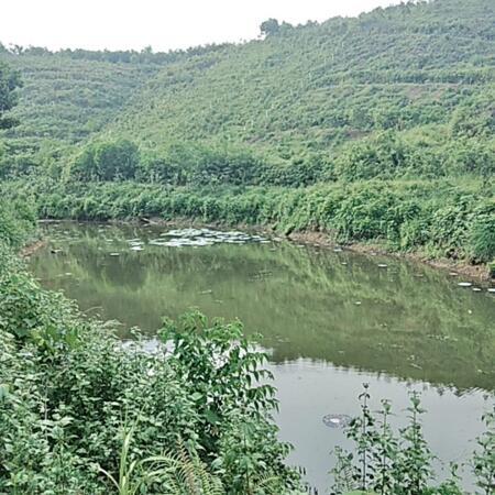 Bán đất Kim Bôi dt 4,5ha có 400m2 thổ cư,gần 1ha đất vườn còn lại là đất rsx- Ảnh 2