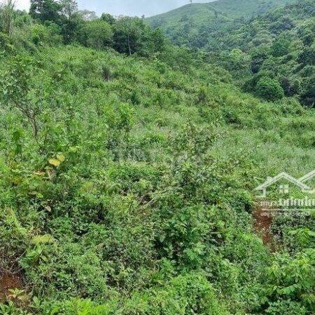 Bán Đất Trang Trại Cao Phong Giá Vài Trăm Triệu- Ảnh 2