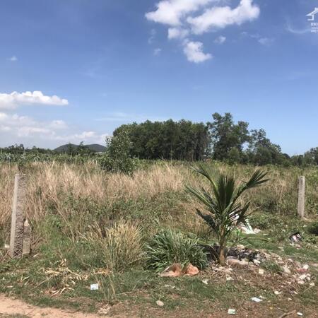 Cần bán 1,1ha đất có 243m mặt tiền đường Hẻm Mai thúc Loan -Tân Hải-Lagi-Bình Thuận giá thương lượng- Ảnh 2