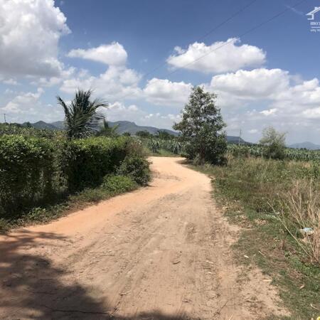 Cần bán 1,1ha đất có 243m mặt tiền đường Hẻm Mai thúc Loan -Tân Hải-Lagi-Bình Thuận giá thương lượng- Ảnh 1