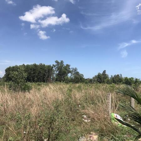 Cần bán 1,1ha đất có 243m mặt tiền đường Hẻm Mai thúc Loan -Tân Hải-Lagi-Bình Thuận giá thương lượng- Ảnh 5