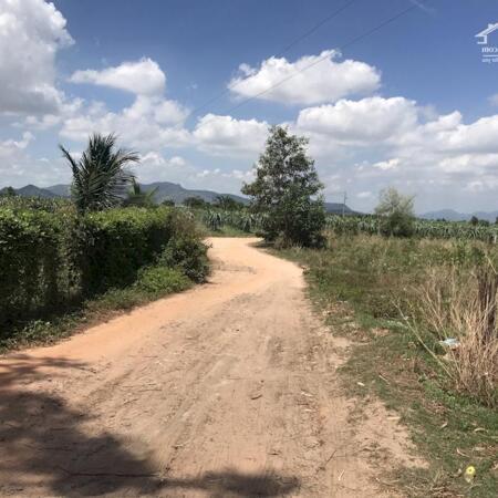 Cần bán 1,1ha đất có 243m mặt tiền đường Hẻm Mai thúc Loan -Tân Hải-Lagi-Bình Thuận giá thương lượng- Ảnh 3