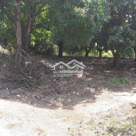 Bán Đất Mặt Tiền Nhựa Đường Nguyễn Thông- Ảnh 7